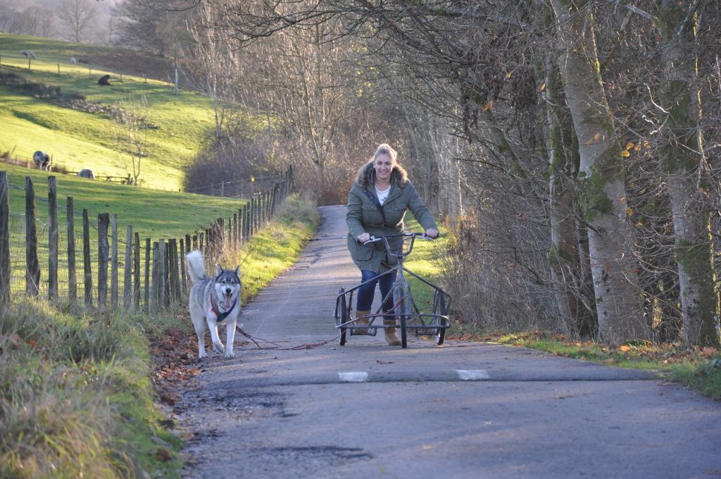 Husky Sledding Experience Transun