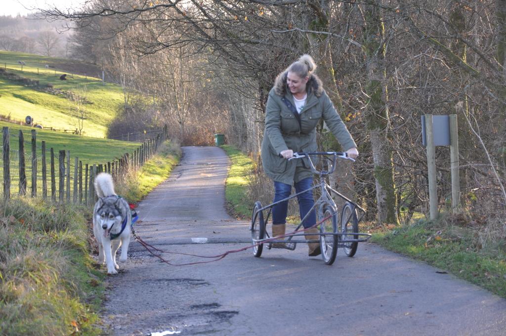 Husky Sledding Experience Transun (7)