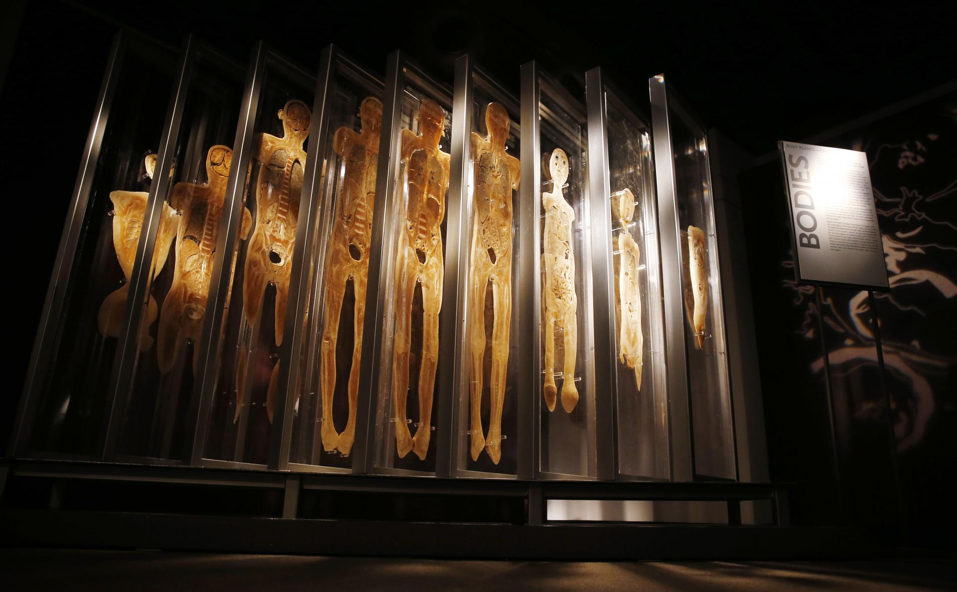 Bodies The Exhibition Las Vegas Luxor